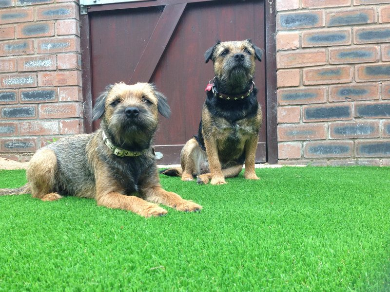 Artificial lawn for pets